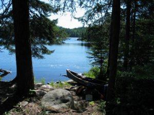 Tranquil MN woods landscape
